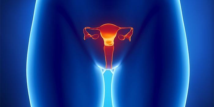 Строение женской репродуктивной системы