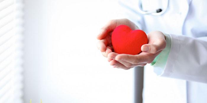 Медик держит резиновое сердце в ладонях