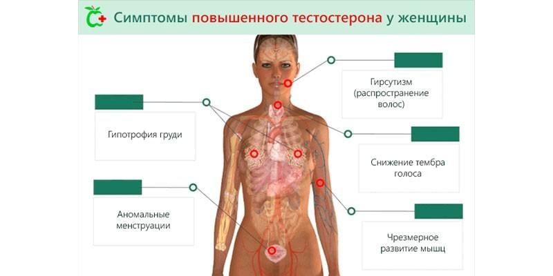 Симптомы повышенного уровня тестостерона у женщин