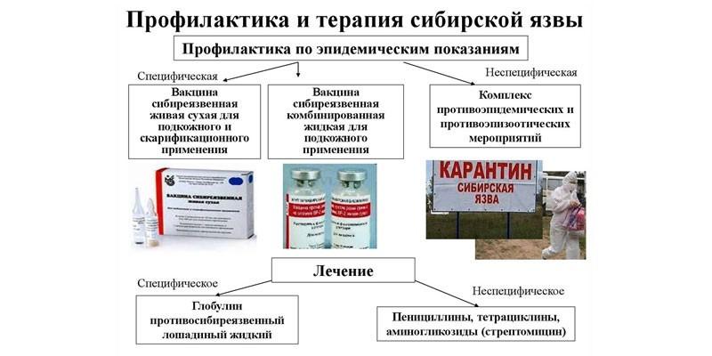 Профилактика и терапия сибирской язвы