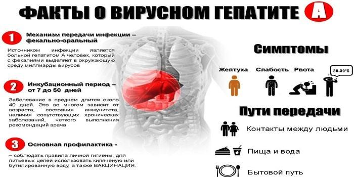 Стадии болезни Боткина