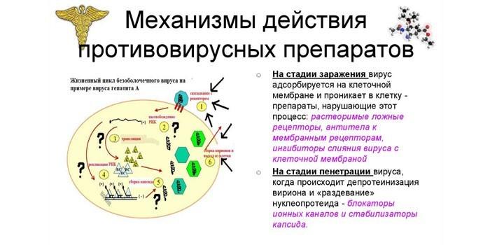 Механизмы действия противовирусных препаратов