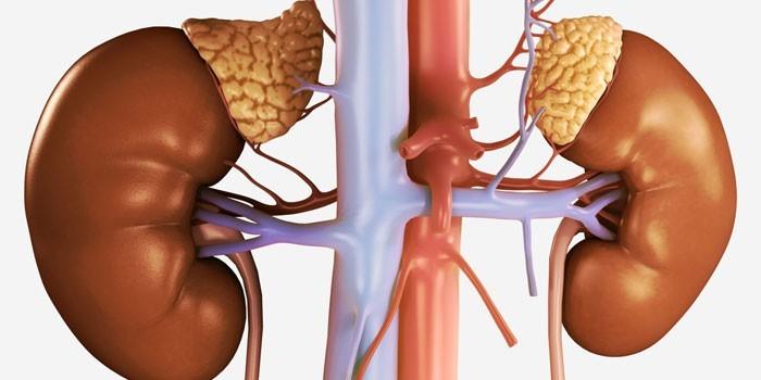 Здоровый надпочечник и пораженный аденомой