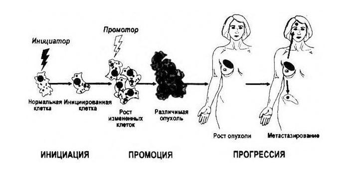 Процесс роста раковой опухоли
