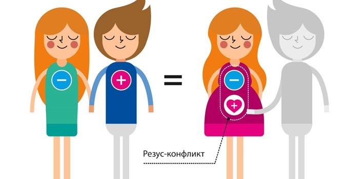 Резус-конфликт при беременности