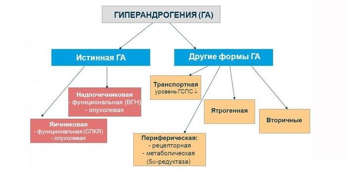 Патогенетические формы гиперандрогении