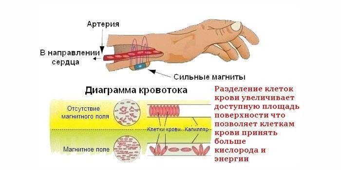 Действие магнитного поля на кровь
