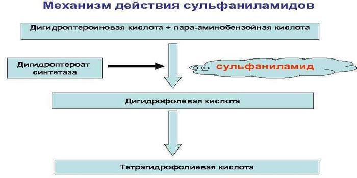 Принцип действия сульфаниламидов