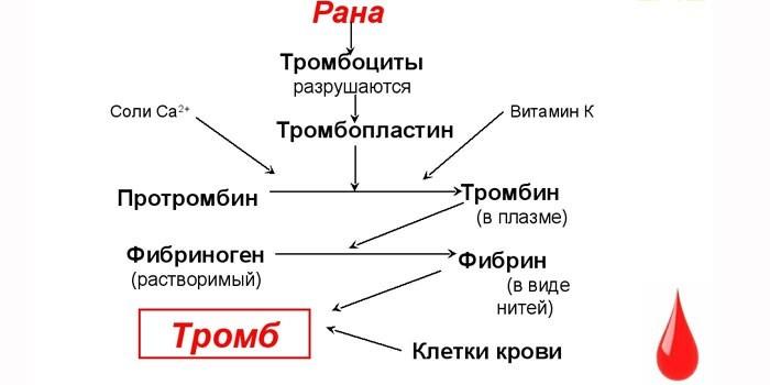 Механизм образования тромбов