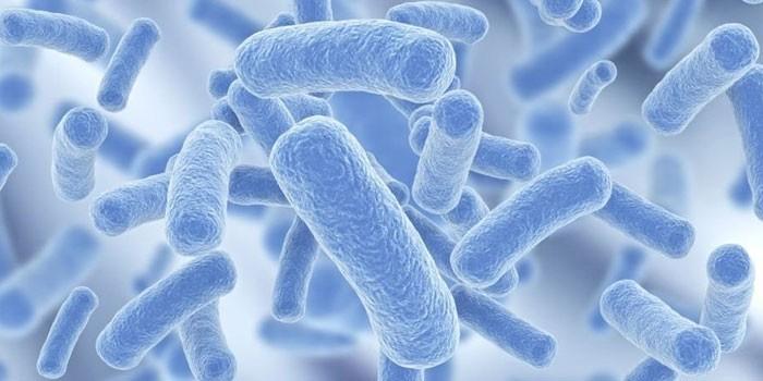 Бактерия легионелла под микроскопом