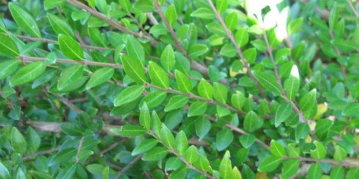 Зеленые листья растения