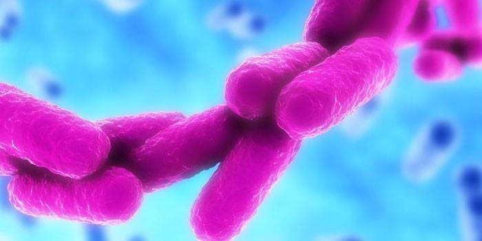 Бактерия Клебсиелла под микроскопом