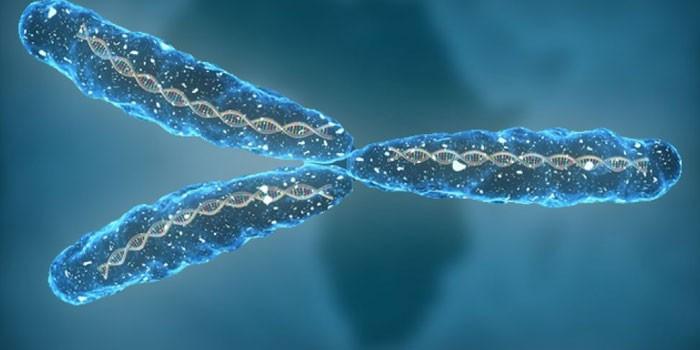 Хромосомы человека