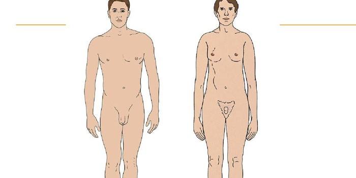 Здоровый мужчина и больной синдромом Клайнфельтера