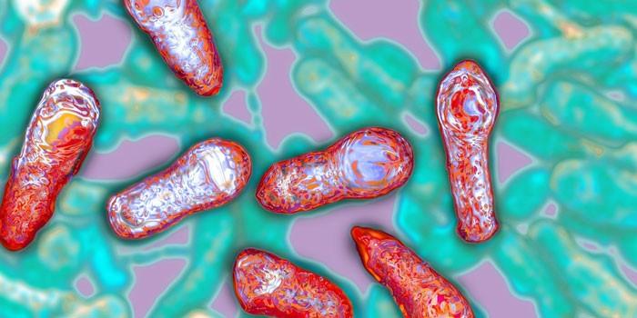 Бактерии ботулизма под микроскопом