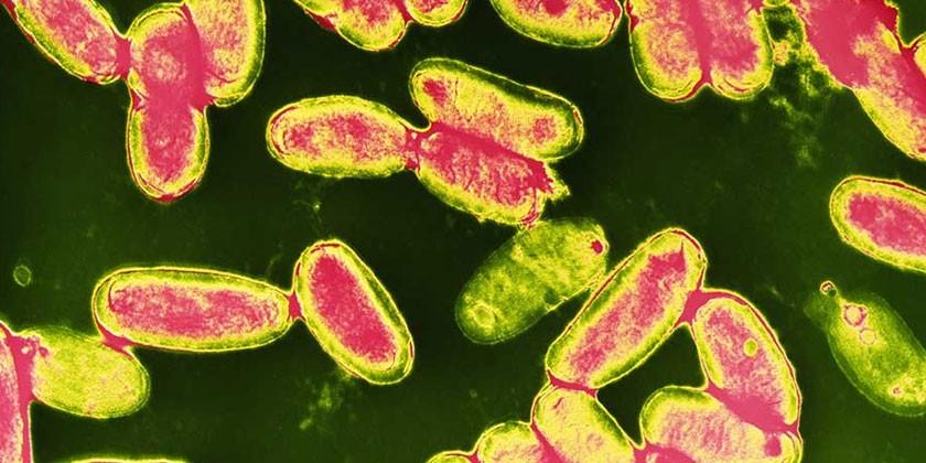 Антибиотики при коклюше у детей