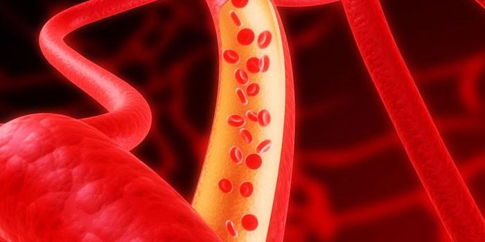 Клетки крови в кровеносном сосуде