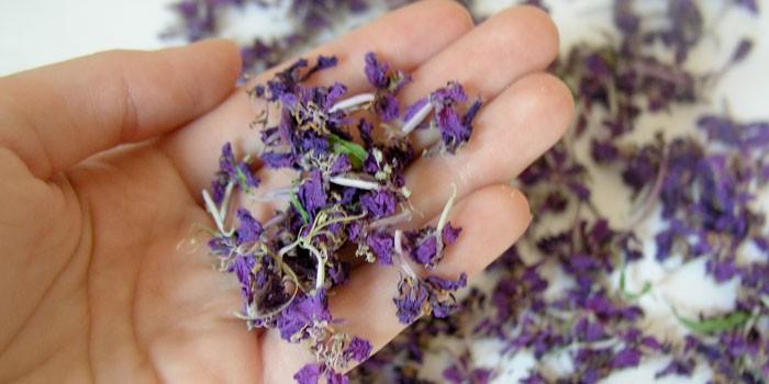 Сушеные цветы иван-чая