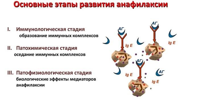 Основные этапы анафилаксии