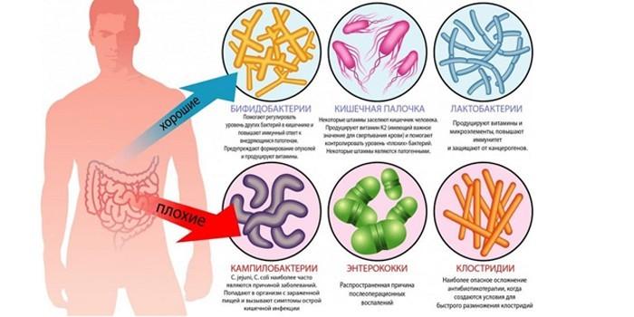 Плохие и хорошие бактерии