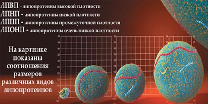 Размеры липопротеинов