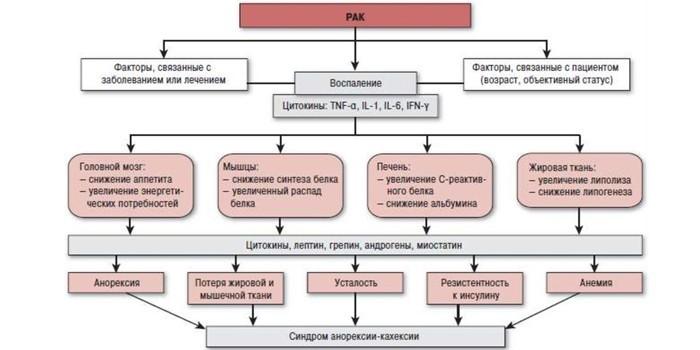 Патогенез анорексии-кахексии