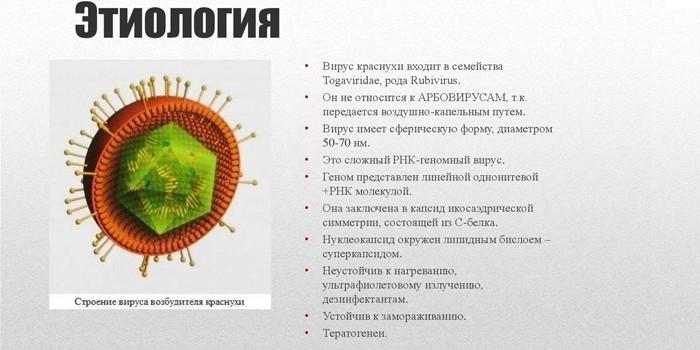 Этиология вируса