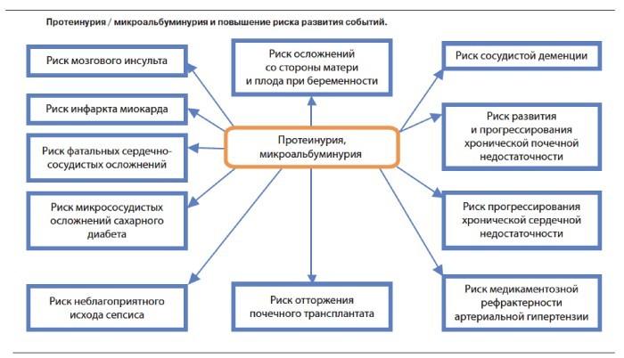 Протеинурия при беременности
