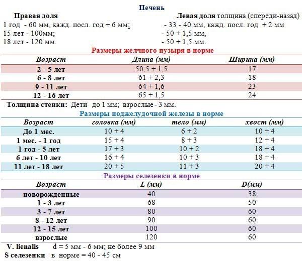 Нормальные показатели при УЗИ органов брюшной полости