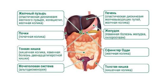 Механизмы болей в животе
