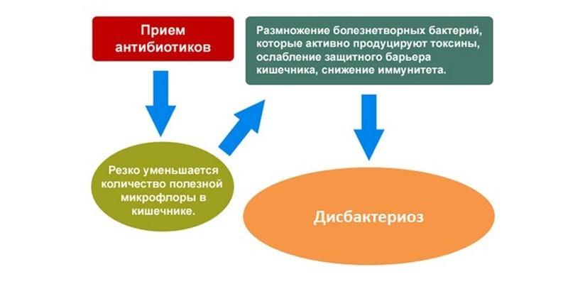 Влияние антибиотиков на развитие дисбактериоза