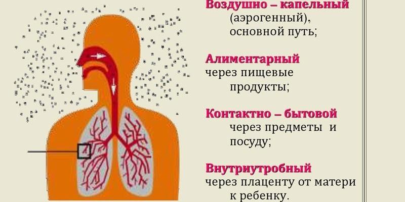 Пути передачи туберкулезной инфекции