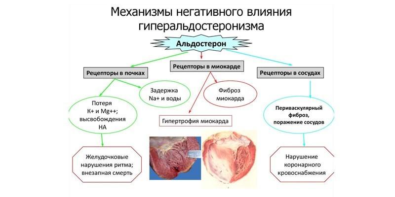 Механизмы негативного влияния гиперальдостеронизма