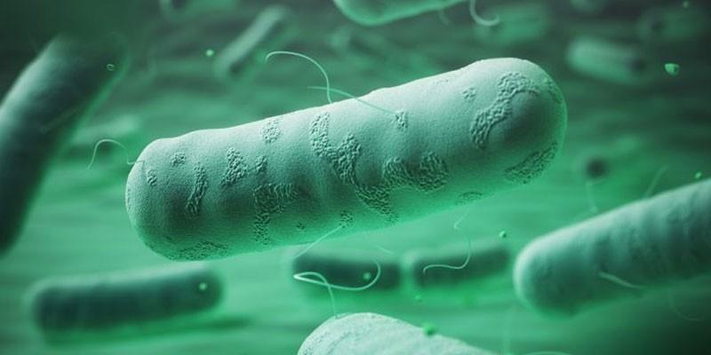 Возбудитель псевдотуберкулеза под микроскопом