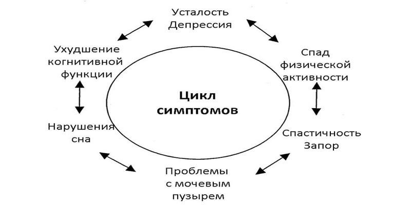 Цикл симптомов рассеянного склероза