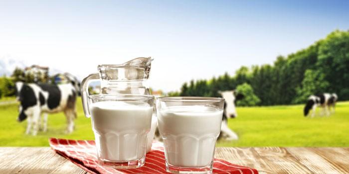 Коровы и молоко в стаканах