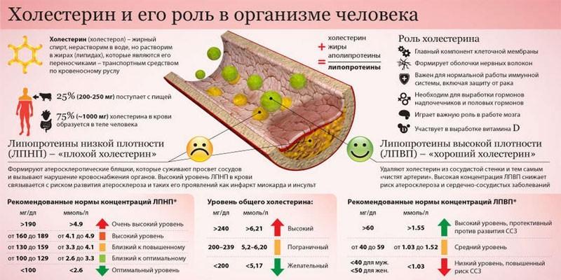 Холестерин в организме человека