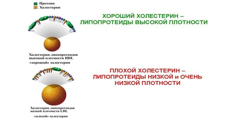 Вред холестерина при гипертонии