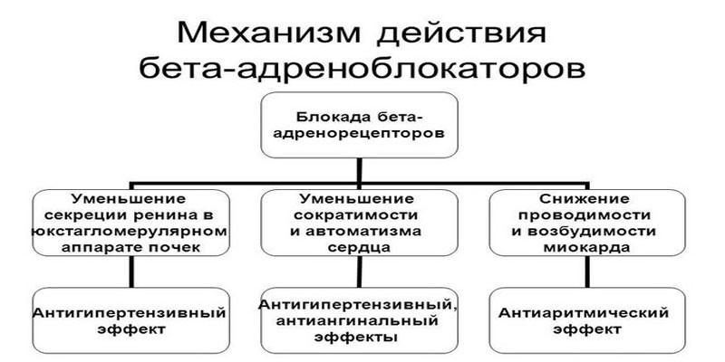 Бета адреноблокаторы механизм действия