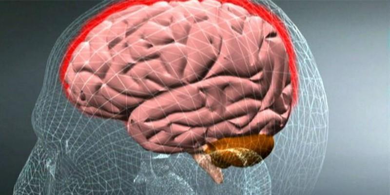 Схема головного мозга