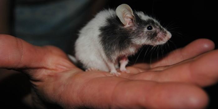 Мышь на ладони