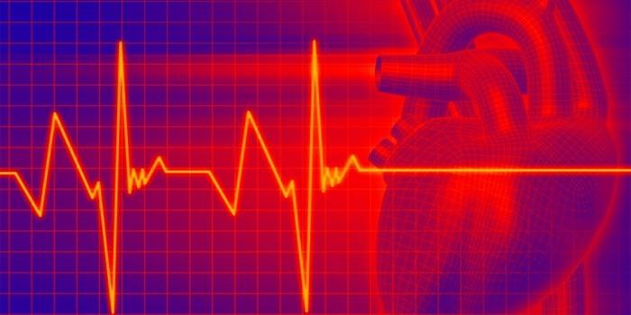 Сердце и сердечный ритм