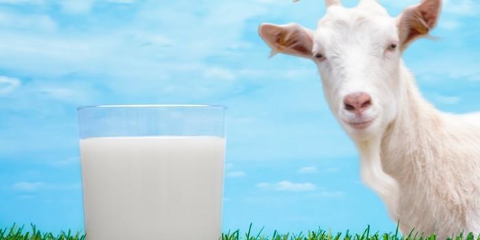 Молоко в стакане и коза