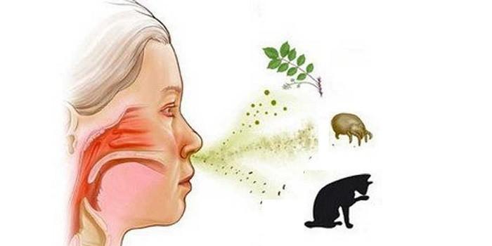 Аллергия на растения, пыль и животных