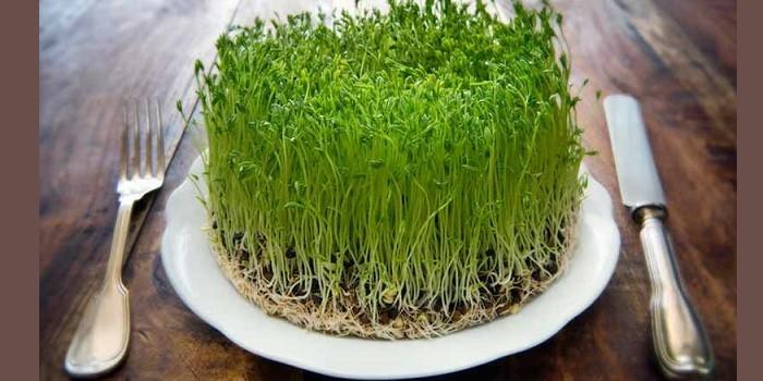 Пророщенные семена люцерны