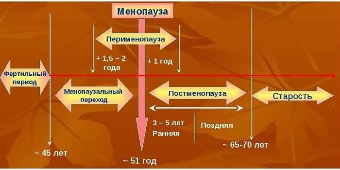3 фазы менопаузы