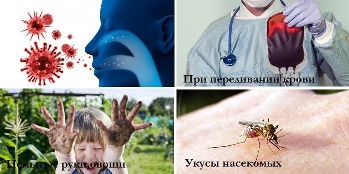 Вирусы, переливание крови, укусы насекомых и немытые руки
