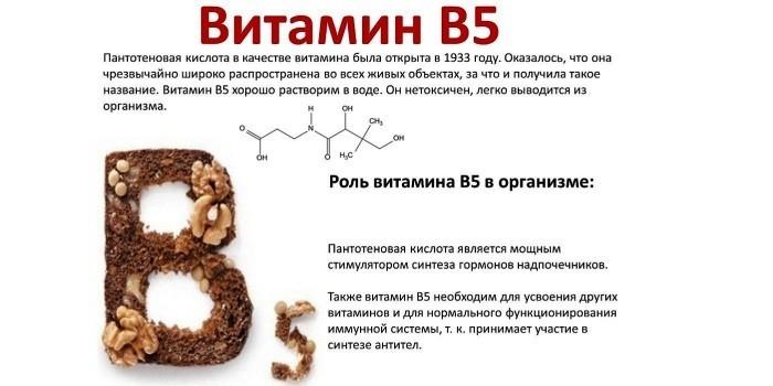 Роль витамина B5 в организме