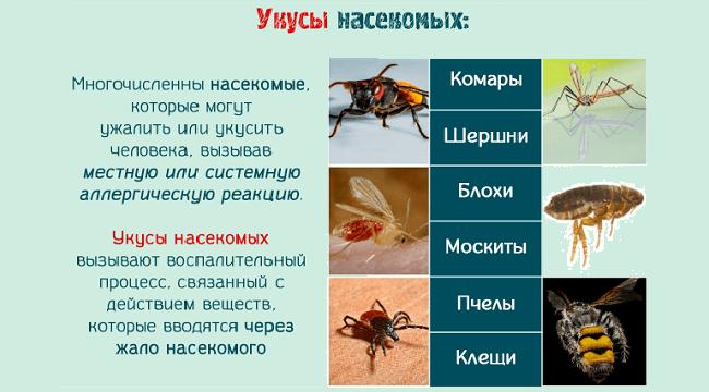 Аллергия от укусов насекомых