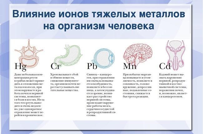Влияние ионов тяжелых металлов на организм человека